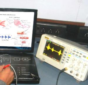 Understanding of Electro-myograph